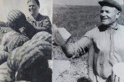 "Камышинский район. Колхоз ""Пионер"". Идёт сбор арбузов. 1960-е годы"