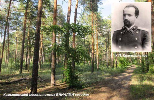 Камышинский лесопитомник ВНИАЛМИ сегодня и К.П. Красильников