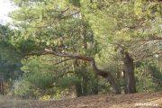 Камышинский лесопитомник ВНИАЛМИ