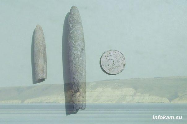 Белемниты, найденные в Камышинском районе