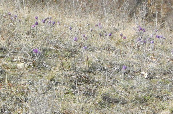 """Весна в природном парке """"Щербаковский"""" (фото специалистов парка)"""