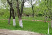 До 12 мая парк Топольки закрыт для каких-либо мероприятий