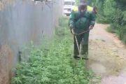 Уничтожение очага наркосодержащего растения