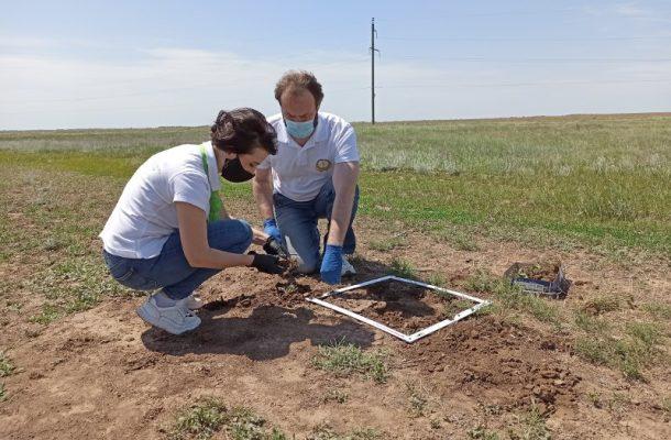 Ученые проводят анализ развития саранчовых вредителей (пресс-служба администрации Волгоградской области)