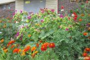 Буйство цветов (улица Базарова)
