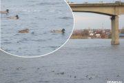 Утки на речке Камышинке