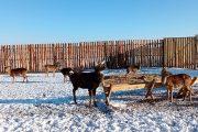 На ферме под Жирновском (пресс-служба администрации Волгоградской области)