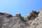 Гробы торчат из берега Волги (Камышинский район)