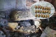 Тайник с гранатами (УФСБ России по Волгоградской области)