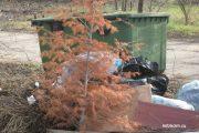 Чья-то новогодняя ель покинула дом 25 апреля