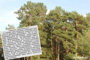 Сосновые посадки ВНИАЛМИ (один из старейших участков - возможно, создан теми самими учащимися реального училища и женской гимназии)
