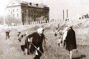 Работы по очистке и досадке саженцев в парке Топольки (за ограждением Бородинского моста виден лакокрасочный завод «Победа», снесённый в 1974 году)
