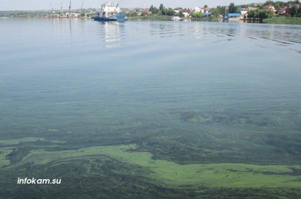 Река Камышинка (19 июля 2021 года)