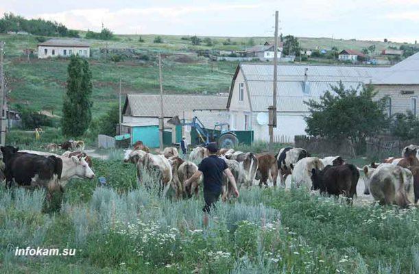Камышинский район, село Белогорки
