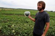 Алексей Маркин с арбузом в виде сердца (администрация Курской области)