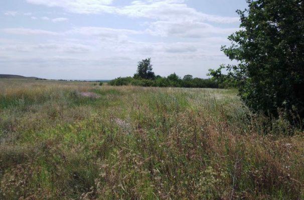 Сухая трава не отделена минерализованной полосой от лесонасаждений