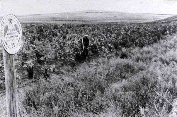 Лесополоса Камышин - Сталинград на 25 км (1956 год)