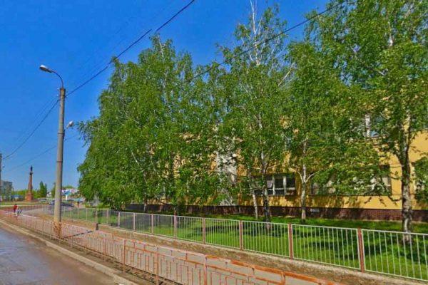 Береза в озеленении детско-юношеского центра (посадка 1995 года)