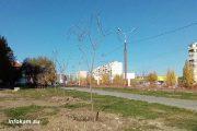 Катальпа прекрасная (пешеходная зона улицы Базарова)